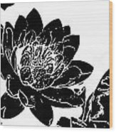Water Lily Black And White Wood Print