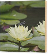Water Lily Dragonfly 2 Wood Print