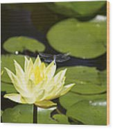 Water Lily Dragonfly Wood Print