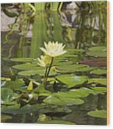 Water Lily Garden 1 Wood Print