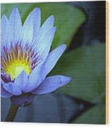 Water Lily Glow Wood Print