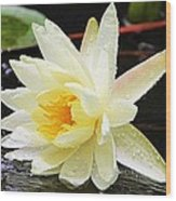 Water Lily In White Wood Print