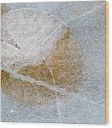 Water Lily Leaf In Ice, Boggy Lake Wood Print