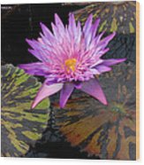 Water Lily Magic Wood Print