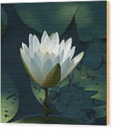 Water Lily Reaching Wood Print