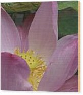 Water Lily Shower Head Wood Print