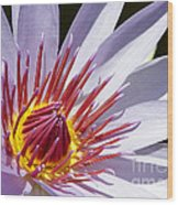 Water Lily Soaking Up The Sun Light Wood Print