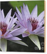 Water Lily Twins Wood Print