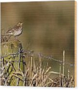 Water Pipit On Post Wood Print