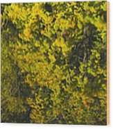 Water Reflection Abstract Autumn 1 F Wood Print