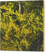 Water Reflection Abstract Autumn 1 G Wood Print