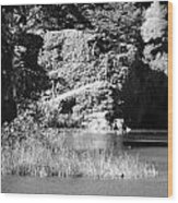 Water Rock Flower In Central Park Wood Print
