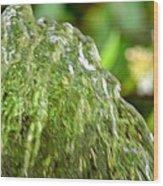 Water Shell Wood Print