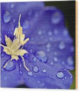 Water The Soul Wood Print