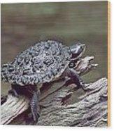Water Turtle Wood Print