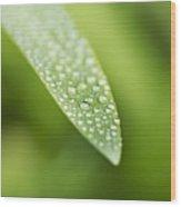 Waterdroplets Wood Print