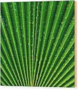 Waterdrops On Palm Leaf Wood Print