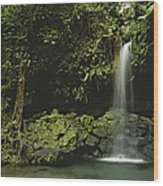 Waterfall And Emerald Pool In A Lush Wood Print