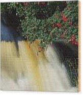 Waterfall And Fuschia, Ireland Wood Print