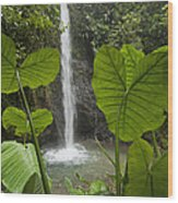 Waterfall In Lowland Tropical Rainforest Wood Print