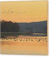 Waterfowl At Turners Falls Canal Wood Print