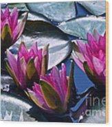 Waterlilies In Bright Sunlight Wood Print
