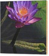 Waterlily 1 Wood Print