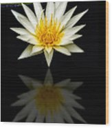 Waterlily And Reflection Wood Print