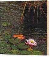 Waterlily In The Rain 2 Wood Print