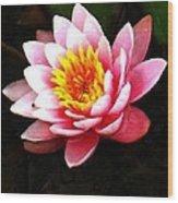 Waterlily On Pond Wood Print
