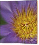 Waterlily Zoom Wood Print