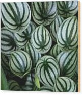 Watermelon Leaves Wood Print