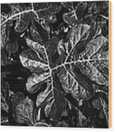 Watermelon Leaves Wood Print