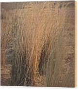 Waves Of Grass Wood Print