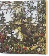 Wax Wing In A Berry Tree  Wood Print