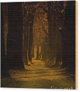 Way In The Forest Wood Print