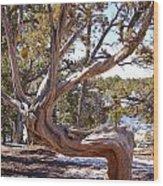 Weathered Tree Wood Print