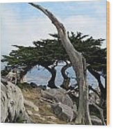 Weathered Tree On California Coast Wood Print