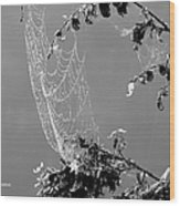 Web In The Rain B-w Wood Print