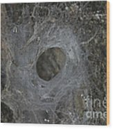 Web Of A Funnel-web Spider Wood Print