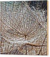Weed Wandering Wood Print