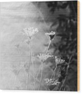 Weeds In A Haze Wood Print