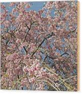 Weeping Cherry Tree In Bloom Wood Print