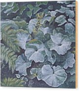 Weeping Ladies Mantle Wood Print