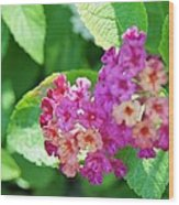 Weeping Lantana Wood Print