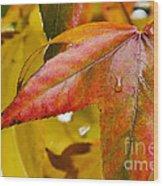 Weeping Red Leaf Wood Print