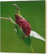 Weeping Rose Bud Wood Print