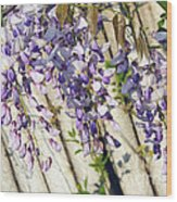 Weeping Wisteria Wood Print