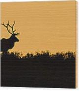 Welcome The Dawn Wood Print