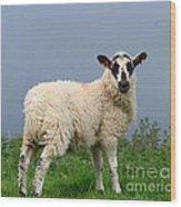 Wensleydale Lamb Wood Print